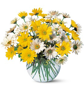 Dashing Daisies in Carol Stream IL, Fresh & Silk Flowers