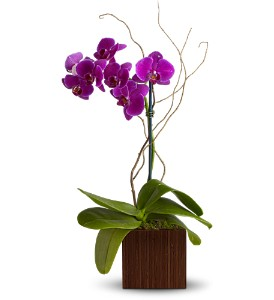 Teleflora's Bamboo Elegance in Calgary AB, All Flowers and Gifts