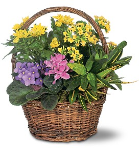 Petite European Basket in Santa Monica CA, Edelweiss Flower Boutique