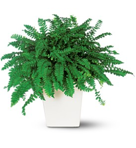 Decorative Fern in Santa Monica CA, Edelweiss Flower Boutique