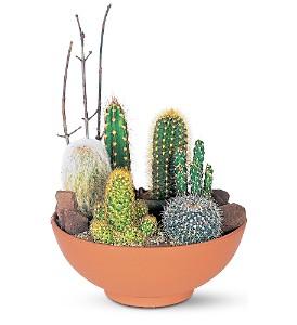 Charmant Cactus Garden In Kingston ON, Pamu0027s Flower Garden