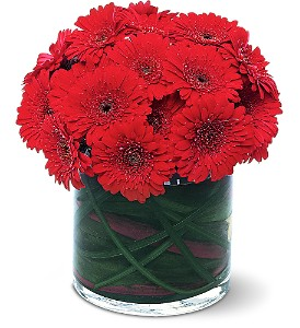 Red Gerbera Collection in Shawano WI, Ollie's Flowers Inc.