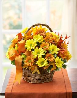 FALL DAISY BASKET in El Cajon CA, Conroy's Flowers
