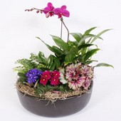 Blooming Garden with Orchid in Concord CA, Vallejo City Floral Co