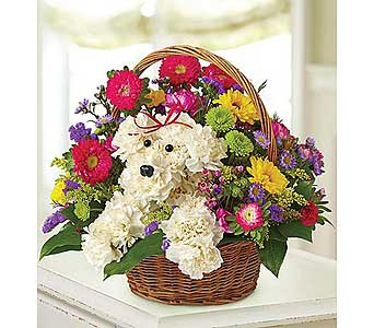 a-DOG-able in a Basket in El Cajon CA, Conroy's Flowers