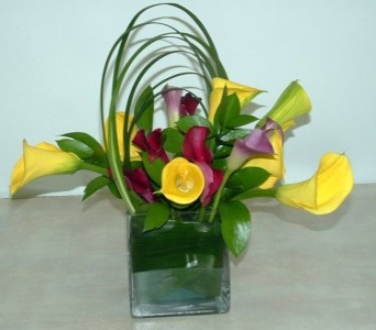 Calla Medly in Plantation FL, Plantation Florist-Floral Promotions, Inc.