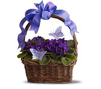 Silk Violets and Butterflies in Bradenton FL, Josey's Poseys Florist