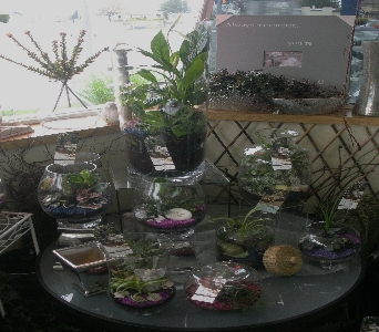 terrariums in Kennewick WA, Shelby's Floral