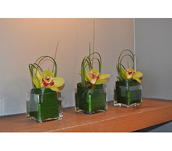 Orchid Trio in Ft. Lauderdale FL, Jim Threlkel Florist