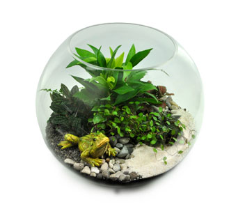 Bubble Bowl Terrarium in Ogden UT, Jimmy's Flowers