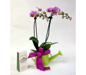 Orchids & Hand Therapy in Kingston ON, Pam's Flower Garden