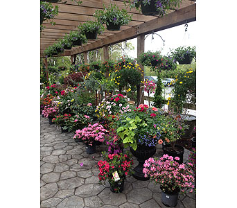 Greenhouse in Port Jervis NY, Laurel Grove Greenhouse