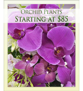 Orchid Plants in Mayfield Heights OH, Mayfield Floral