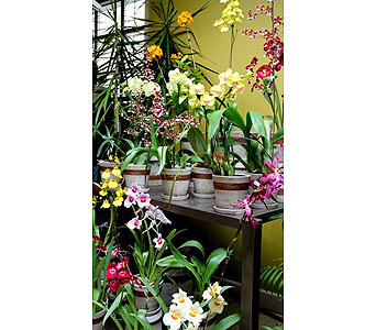 Orchid Plant of the Day in Kingston ON, Pam's Flower Garden