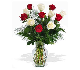 Red and White Roses in St. Louis MO, Walter Knoll Florist
