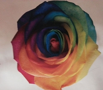 Rainbow Rose in Butte MT, Wilhelm Flower Shoppe
