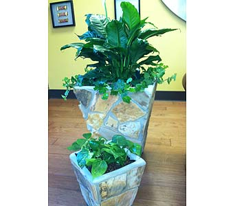 Hydorponics for your home or office in Chattanooga TN, Chattanooga Florist 877-698-3303