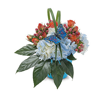 Berries in Blue in Plantation FL, Plantation Florist-Floral Promotions, Inc.