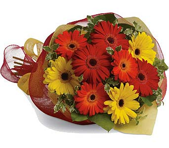 Mixed Gerbera Bouquet in Kanata ON, Talisman Flowers