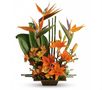 Exotic Grace Birds of Paradise in Santa Monica CA, Edelweiss Flower Boutique