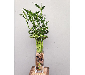 Lucky Bamboo in Portland OR, Portland Florist Shop