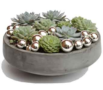 Winter Succulent Bowl in Santa Monica CA, Edelweiss Flower Boutique