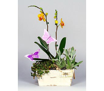 Charlotte Orchids & Succulents in Kingston ON, Pam's Flower Garden