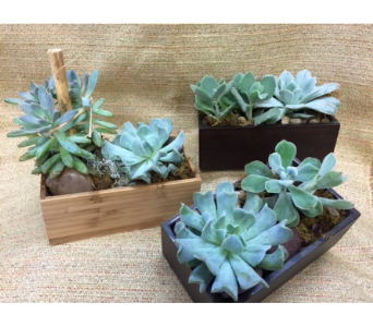 bamboo box of succulents in Chicago IL, La Salle Flowers