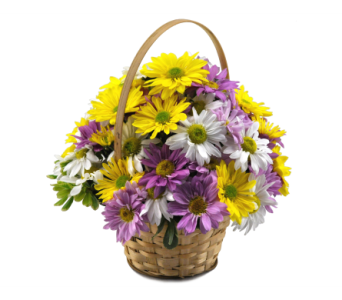 Daisy Basket in Cincinnati OH, Jones the Florist