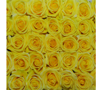 Brighton Yellow Roses in Jonesboro AR, Posey Peddler