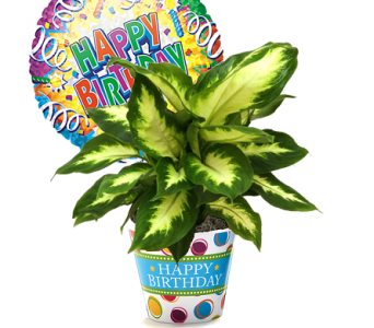 Happy Birthday Desktop Green Plant in Birmingham AL, Norton's Florist