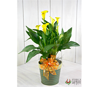 Calla Lily Plant in Pendleton IN, The Flower Cart