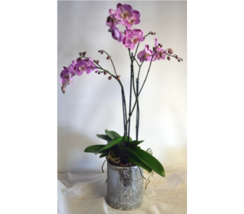 Fabulous orchids in Plantation FL, Plantation Florist-Floral Promotions, Inc.