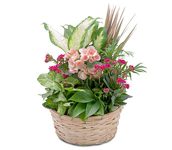 Lush Dish Garden in Corpus Christi TX, Always In Bloom Florist Gifts