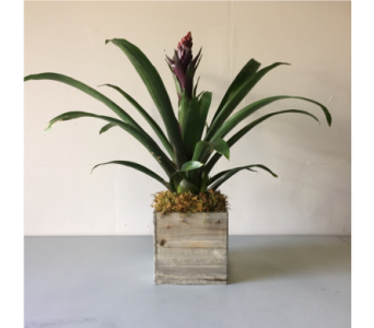 Bromeliad in Walla Walla WA, Holly's Flower Boutique