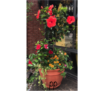 Hibiscus Planter in Jonesboro AR, Posey Peddler