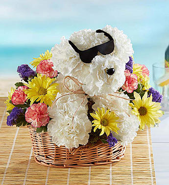 Cool Pup by 1-800flowers in Las Vegas NV, A French Bouquet