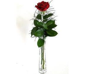 Single Red Rose Bud Vase in Perrysburg & Toledo OH  OH, Ken's Flower Shops