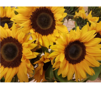 Sunny Sunflowers in Kingston ON, Pam's Flower Garden