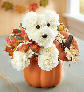 a-DOG-able fro Fall from 1800flowers in Las Vegas NV, A French Bouquet