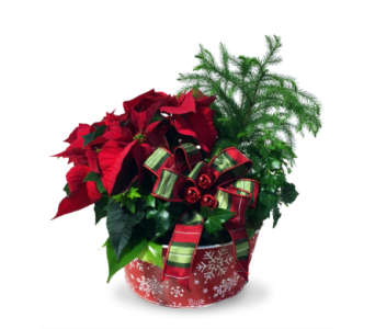 Red, Green & Bright in Indianapolis IN, McNamara Florist