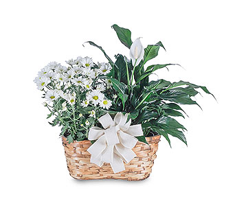 Blooming and Green Plant Combination in Plantation FL, Plantation Florist-Floral Promotions, Inc.