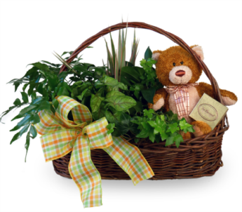 Teddy Bear Basket in Indianapolis IN, McNamara Florist