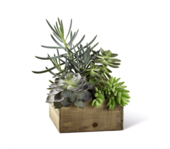 Rustic Box of Succulents in Chicago IL, La Salle Flowers