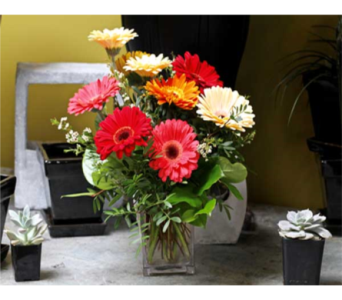 Gerbera Deal of the Day in Kingston ON, Pam's Flower Garden