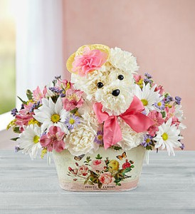 Precious Pup by 1800flowers in Las Vegas NV, A French Bouquet
