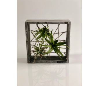 Air Plant Display Box in Wichita KS, Tillie's Flower Shop