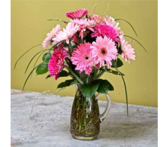 Pitcher of Gerbera in Kingston ON, Pam's Flower Garden