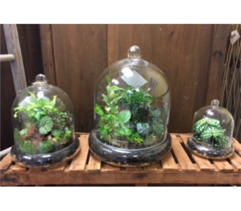 Cloche Terrarium Family in Ashburn VA, Lavender Fields
