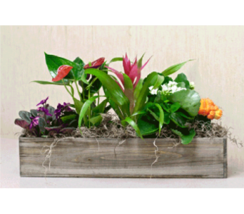 Planter Slider in Kingston ON, Pam's Flower Garden